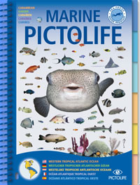 All Tropical Atlantic sea-life, the Marine Pictolife describes more than 250 marine species. With its completely waterproof, plasticized pages, it easily fits into a diving vest pocket or a beachbag.