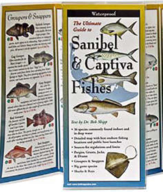 Fishes of Sanibel and Captiva
