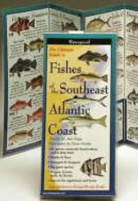 Fishes of the South Atlantic Coast