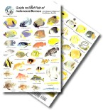 Guide to Reef Fish of Indonesia and Borneo