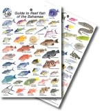 Guide to Reef Fish of the Bahamas