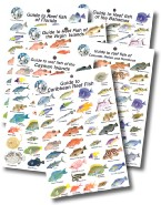 The Caribbean Collection of Reef Fish Guides